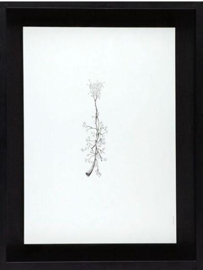 Eva Gerd, 'Escoplo 3', 2007