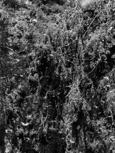 Axel Antas, 'Kaleidoscope Landscape (Symmetries II)', 2019
