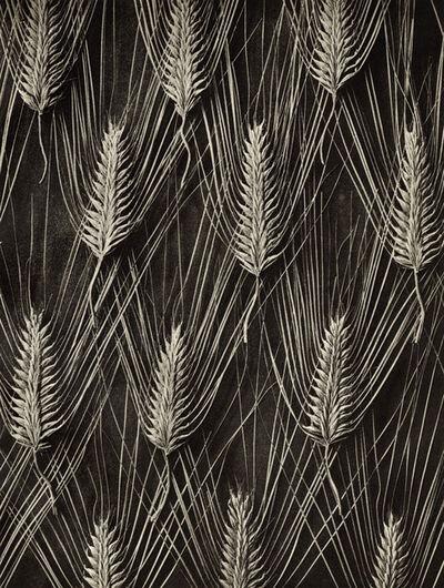 Karl Blossfeldt, 'Plate 55- Hordeum distichum', 1932
