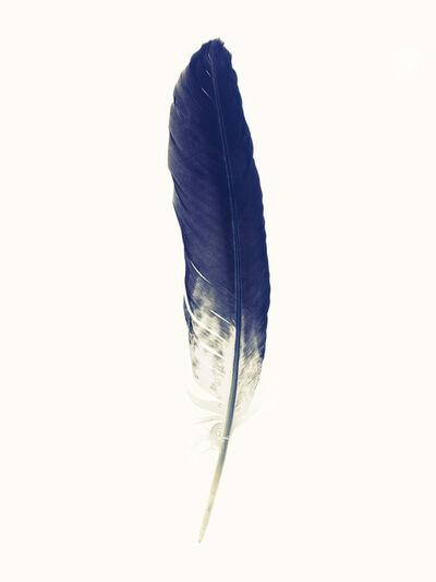 Lyle Owerko, 'Feather #6 - 1/9', 2019