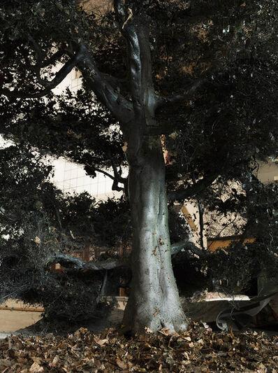 Edwin Zwakman, 'Tree', 2019
