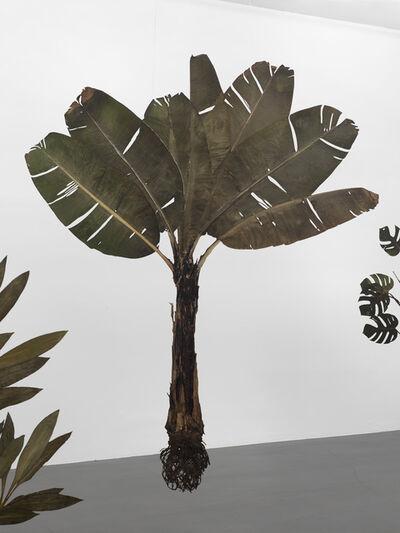 Julius von Bismarck, 'I like the flowers (Musaceae)', 2017