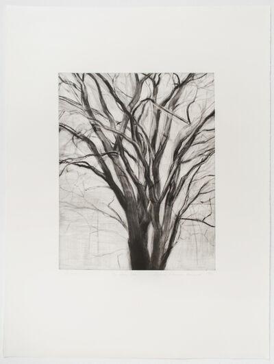 Sylvia Plimack Mangold, 'The Elm Tree', 1991