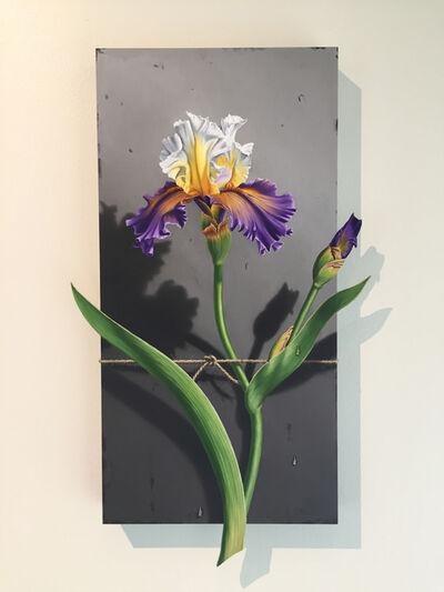 Otto Duecker, 'Nature Bound - Purple and Yellow Iris', 2020