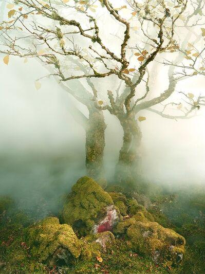 Albert Watson, 'Tree Fairy Glen', 2013