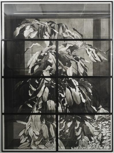 Justin Weiler, 'Plante en vitrine', 2019