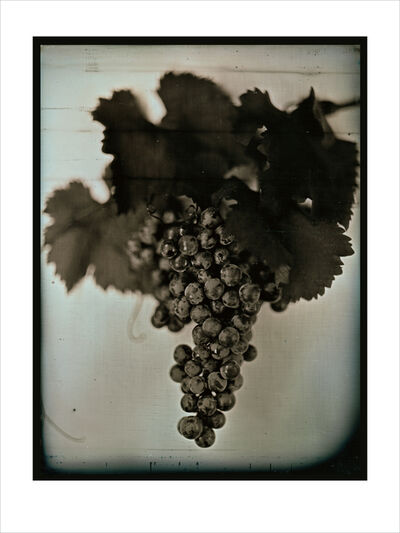 Chuck Close, 'Red Wine Grapes 1', 2007
