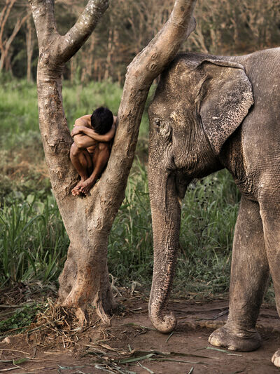 Steve McCurry, 'Mahout and His Elephant at a Sanctuary. Chiang Mai, Thailand, Steve McCurry, Photography, Fine Art Print', 2010