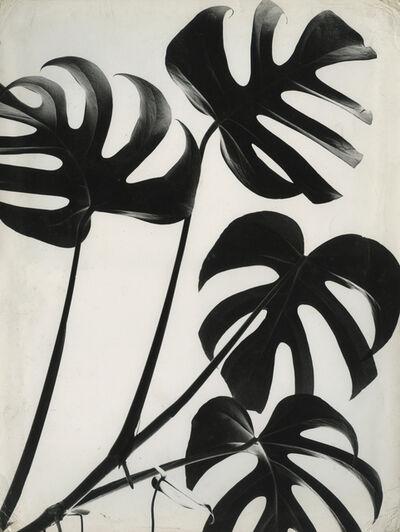 Marcel Giró, 'Folhas', c. 1950
