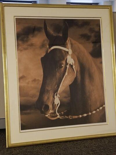 Michael Eastman, 'Horse #5', 1999