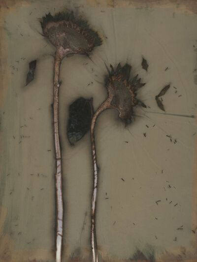 James Hajicek and Carol Panaro-Smith, 'Sunflower', 2007