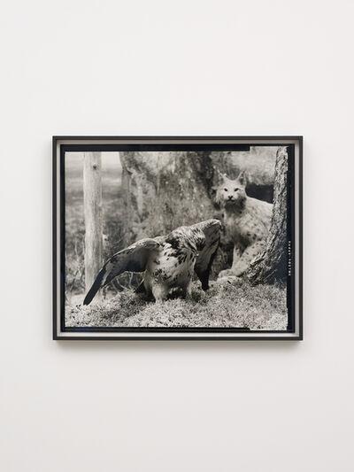 Gerard Byrne (b. 1969), 'Rough Legged Buzzard - First beast', 2018