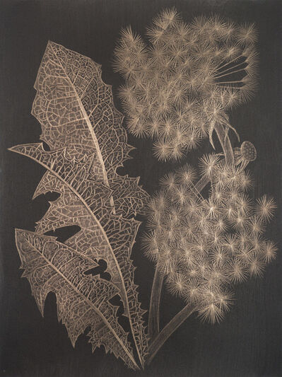 Margot Glass, 'Two Dandelions (a)', 2019