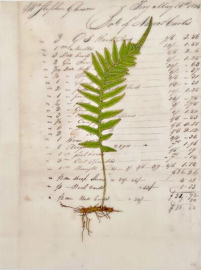 Kenna Moser, 'Licorice Fern #3', 2020