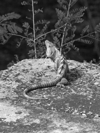 Mårten Lange, 'Lizard', 2016