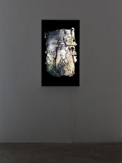 Persijn & Margit Broersen & Lukács, 'Birch', 2018