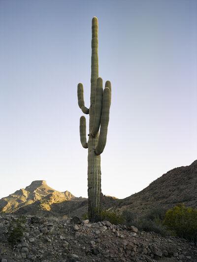 Mark Klett, 'Saguaro 2 Arms Left Near Hat Mountain', 2016