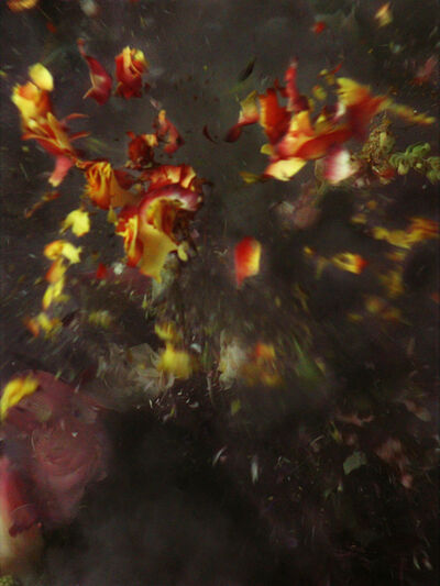 Ori Gersht, 'Time After Time - Untitled No. 29', 2007