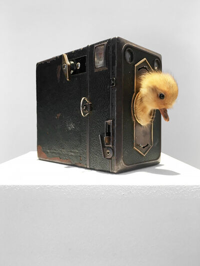 Nancy Fouts, 'Look at the birdie,', 2012
