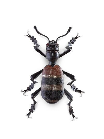 Edouard Martinet, 'Brown Striped Beetle', 2017