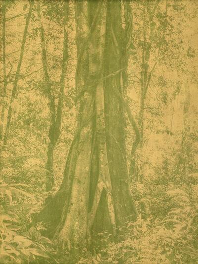 Yann Gross, 'Mayantuyacu', 2019