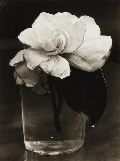 Consuelo Kanaga, 'Camellia in Water', 1927-1928