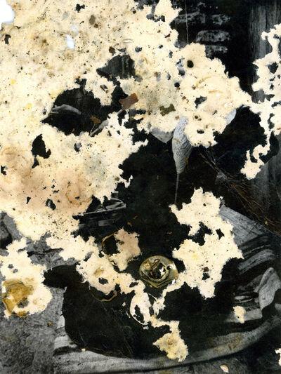 Joan Fontcuberta, 'Untitled', 2013-2015