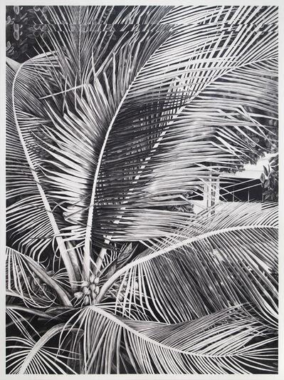Daniel Otero Torres, 'Sans titre (palmier)', 2015