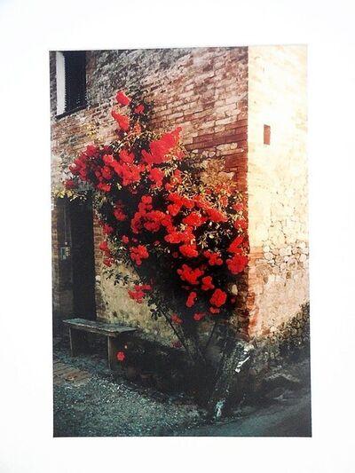 Joel Meyerowitz, 'Tuscany, Roses Taverna d'Arbia, 1991', Late 20th Century