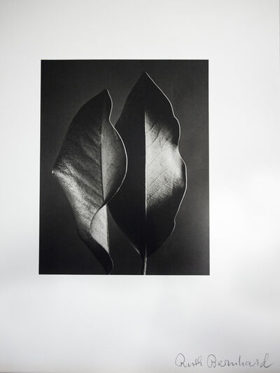 Ruth Bernhard, 'Two Leaves', 1952