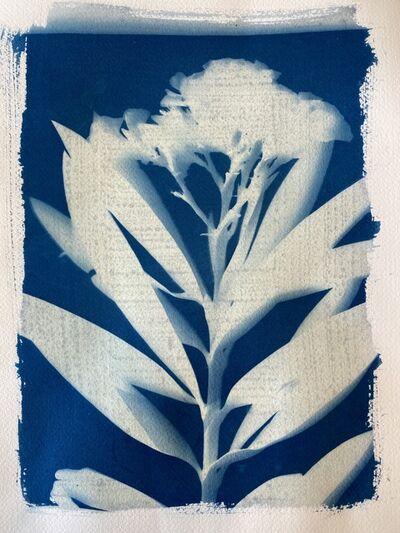 Keris Salmon, 'Oleander', 2020
