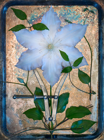 Jo Whaley, 'Clematis', 2018