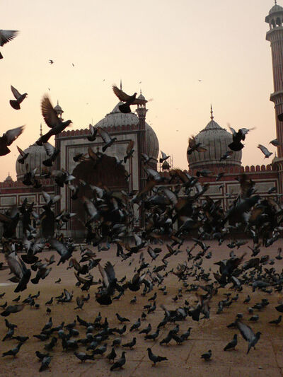 Ralf Schmerberg, 'Birds Have No Religion, Jama Masjid, New Delhi, India', 2013