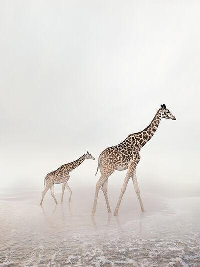 Alice Zilberberg, 'Go Giraffe', 2019