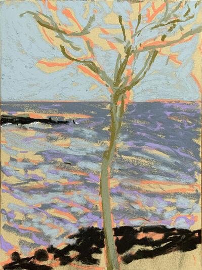 Nicole Wittenberg, 'Rocky Beach Tree', 2020