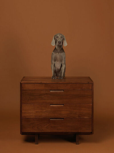 William Wegman, 'Addressed', 2015