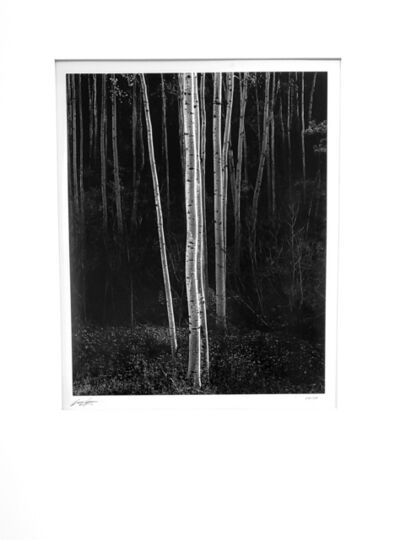 Ansel Adams, 'Aspens, Northern New Mexico (vertical format)', 1958