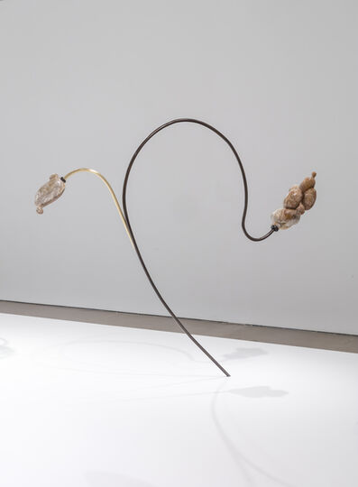 Jennifer Rose Sciarrino, 'From Root to Lip (yeast)', 2019