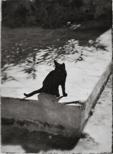 Wendi Schneider, 'Black Cat, Greece', 2003