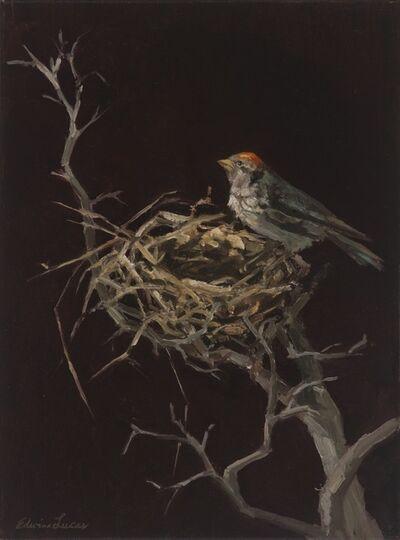 Edwina Lucas, 'Bird in Nest', 2015