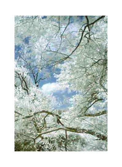 Thomas Ruff, 'Spring JPEG', 2012