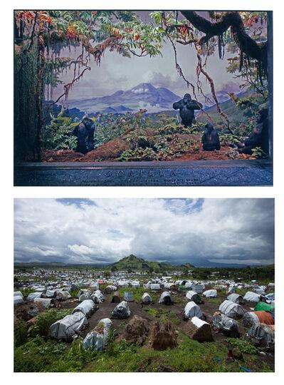 Sammy Baloji, 'Mountain gorilla diorama, Kivu Moutains: Akeley Hall of African Mammals, American Museum of Natural History, New York. & Camp for war refugees, Bulengo, Goma, 2013. Sammy Baloji.', 2013