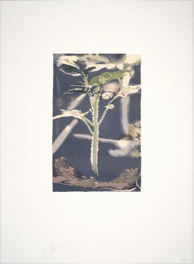 Luc Tuymans, 'Gene', 2004