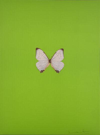 Damien Hirst, 'Six Butterflies II', 2011