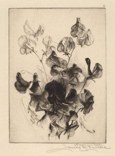 James David Smillie, 'Sweet Peas', 1891