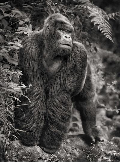 Nick Brandt, 'Gorilla on Rock, Parc des Volcans', 2008