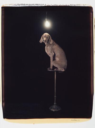 William Wegman, 'Illuminary', 1993