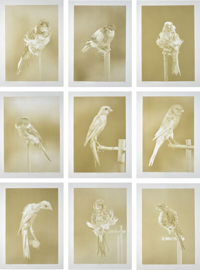 Carsten Höller, 'Canaries', 2009