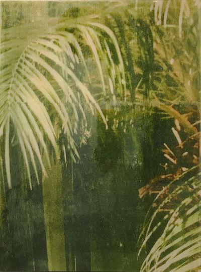 Ernesto Cánovas, 'Botanic XXXI', 2017