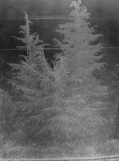 Daisuke Yokota, 'Untitled (Tree) ', 2012
